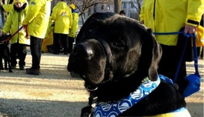 Local four-legged resident marches in inaugural parade