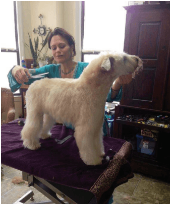 Grooming a business: Pet salons flourish