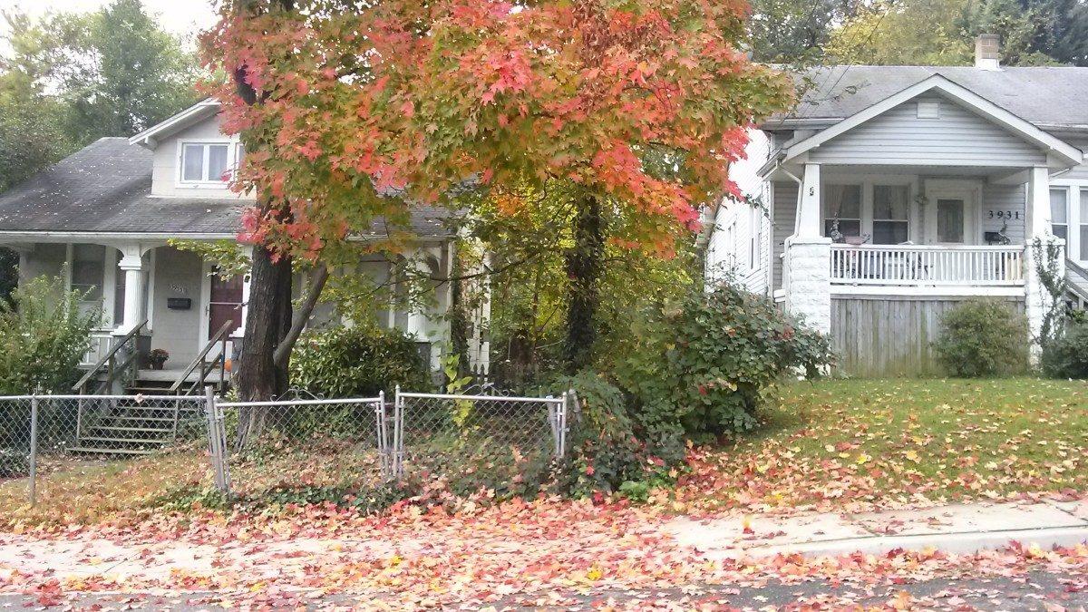 City leaf collection begins November 3
