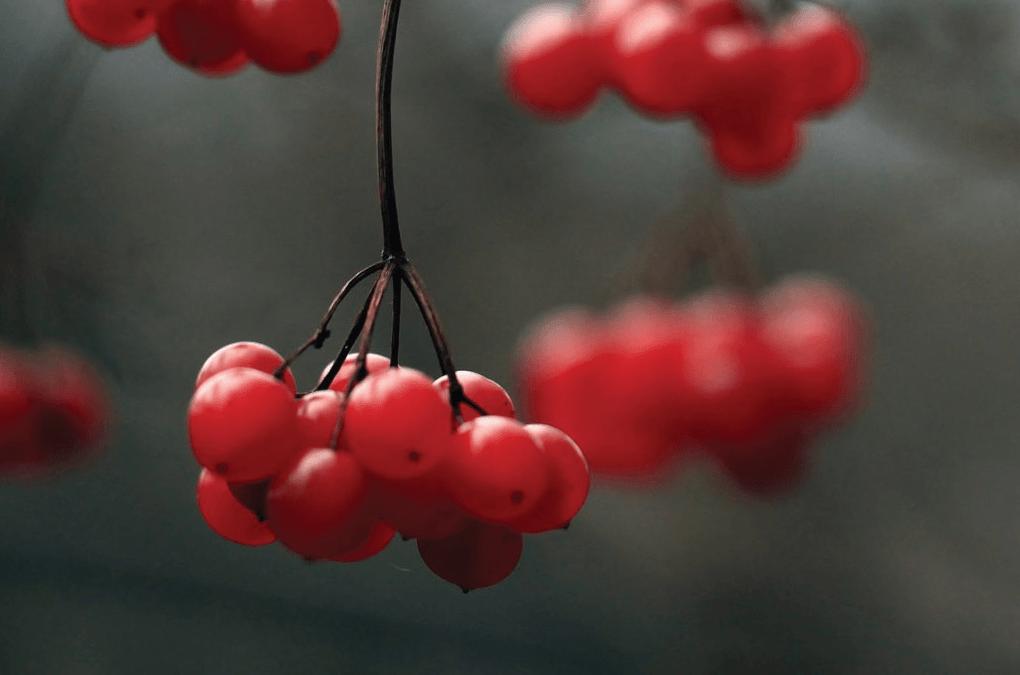 Miss Floribunda: Looking for berries and birds in winter