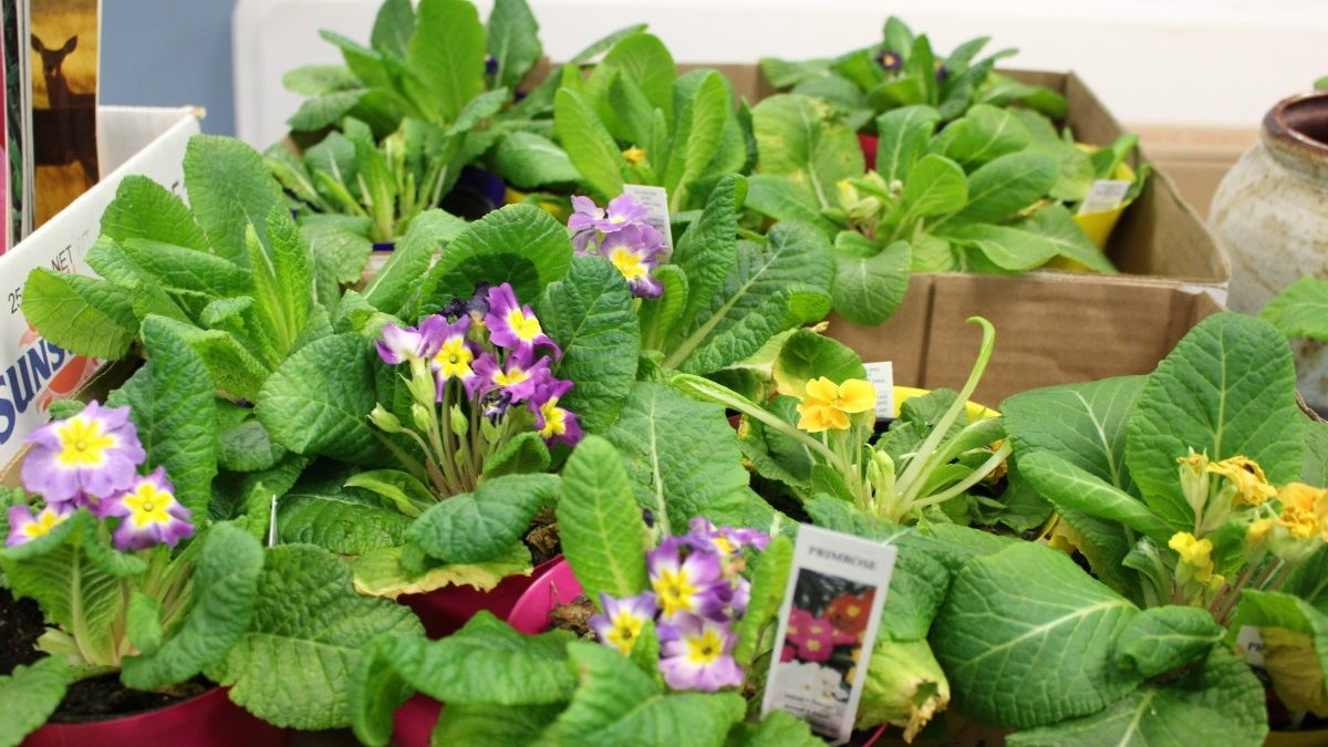 PHOTOS: Hyattsville Horticultural Society seed sale