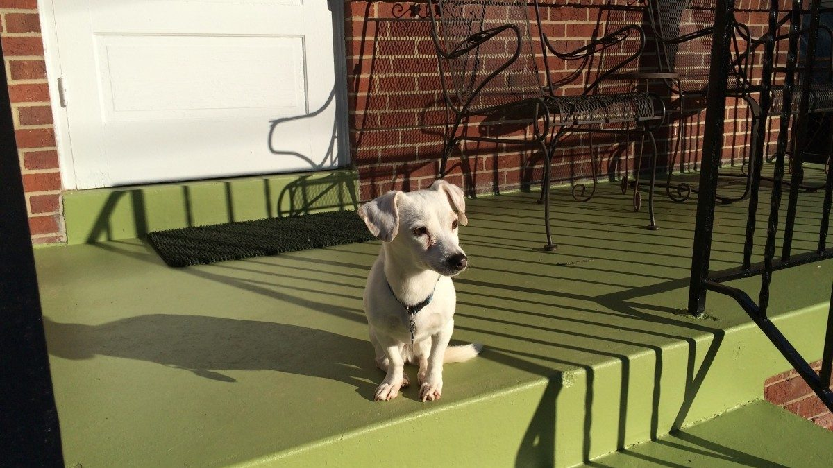 Locals organize forum on loose aggressive dogs
