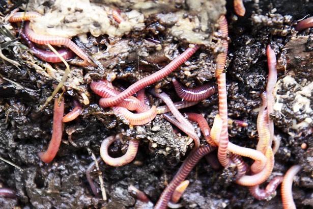 Hyattsville begins pilot composting program