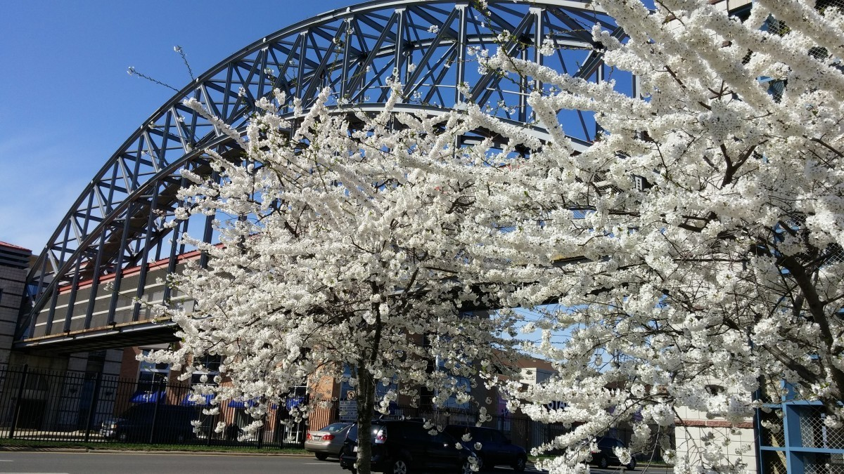 Photos: All the signs that spring has sprung in Hyattsville