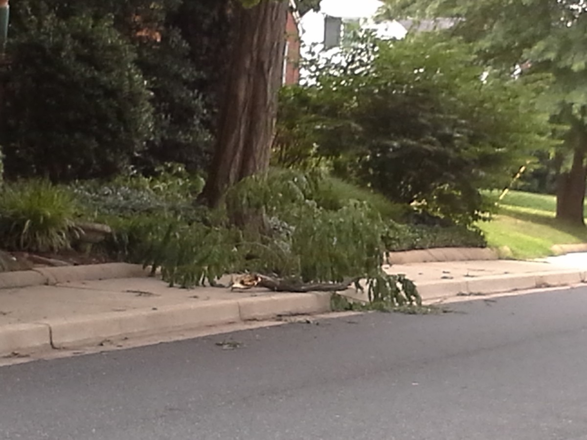 The July 8 storm downed branches. Photo by Susie Currie