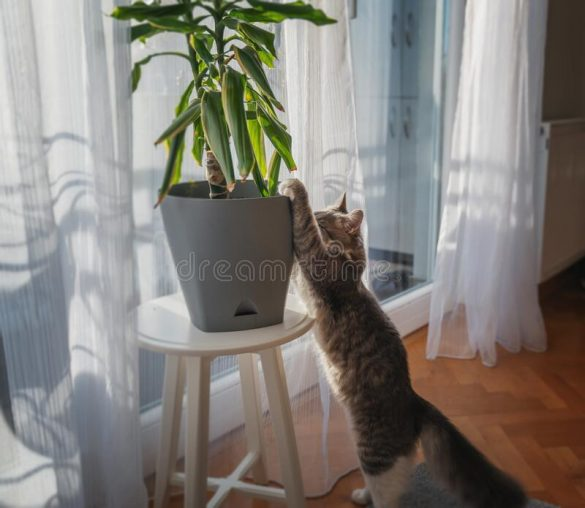cat playing with plant