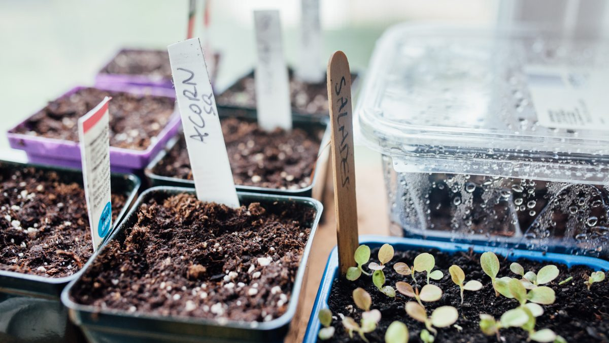 Zero Waste of Time: Reuse, recycle, repurpose in the garden