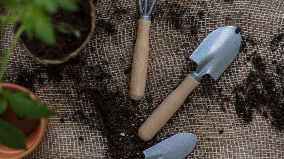 Miss Floribunda: Salvaging seedling sabotage