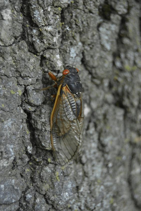 Miss Floribunda: Cicadas and mosquitoes and birds, oh my!